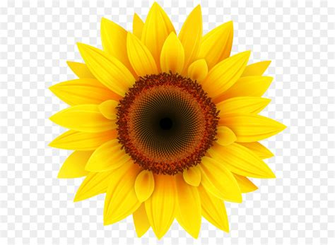 Common sunflower Pixel XCF - Sunflower PNG Clipart Picture